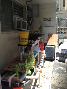 Backporch Aquaponics System Update